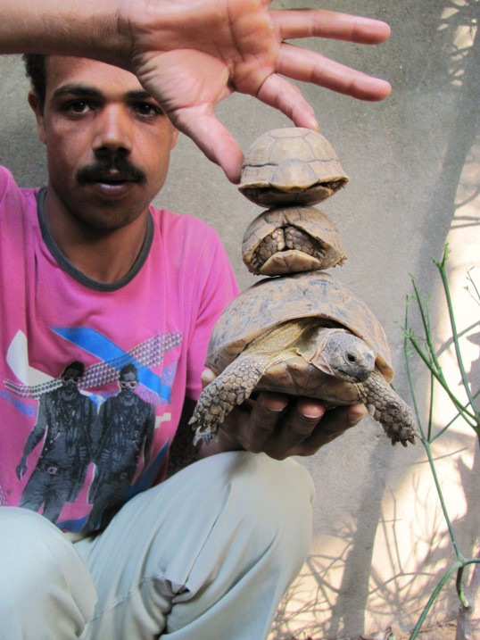 in Luxor, Egypt, turtles are still allowed to ride on turtles.
